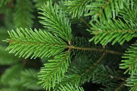 green valley christmas trees home facebook