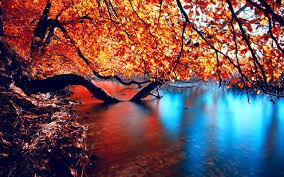 lakes water lake tree colors river autumn peaceful beautiful