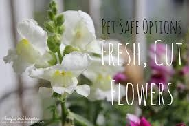 fresh cut flowers pet safe fresh cut flowers options