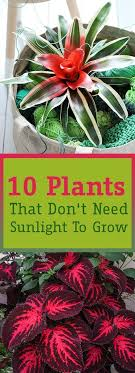 plants that don t need sunlight to grow 10 plants that don t need sunlight to grow sunlight backyard