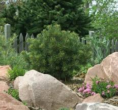 plant select petites inspiration plants for rock gardens and small