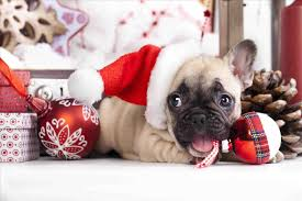 cute dog christmas wallpapers cheminee website page 513 christmas crafts