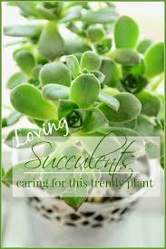 651 best succulent plants images on pinterest succulent
