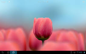 3d tulip live wallpaper free android apps on google play