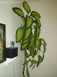indoor gardening and houseplants tips on propagating a