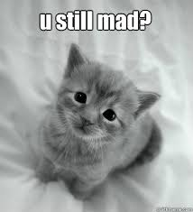 Sad Kitten Meme - u still mad sad kitty quickmeme