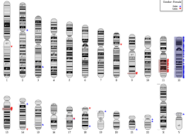 Dna Mapping Mapping Ngs Data Which Genome Version To Use