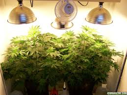 cfl grow lights for indoor plants best grow lights the benefits of sun dining room set up ideas