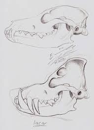 pig skull u0027s skull by paperiapina on deviantart