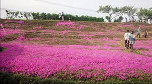 innovative pink flower garden pink garden flower flowers ideas