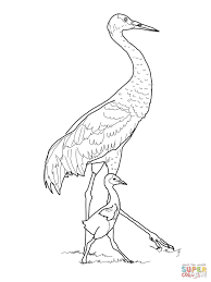 sandhill crane with baby coloring page free printable coloring pages