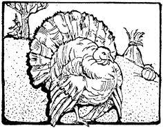 thanksgiving turkey colouring pages girls boys color