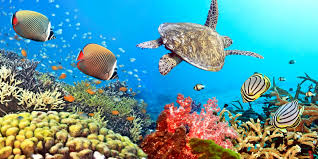 tropical coral reef underwater ocean fishes underwater world coral