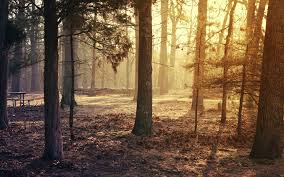 New Jersey Forest images United states new jersey forest reserve named brendan bern usa jpg