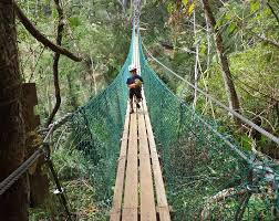 awesome suspension hammock bridge picture of cave tubing bz