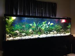 Best Substrate For Aquascaping Choosing An Aquarium Substrate Tropical Fish Site