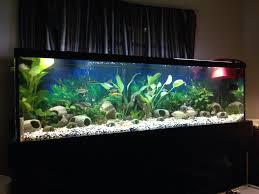 choosing an aquarium substrate tropical fish site