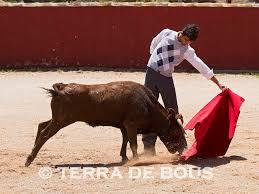 terra de bous los samueles para 2013