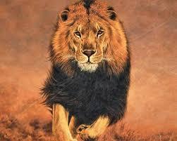 the 25 best wildlife wallpaper ideas on pinterest animal