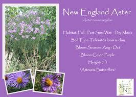 native plant nursery illinois ppn catalog u2013 pleasant prairie nursery