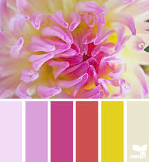color matching design seeds color palettes paint my place app