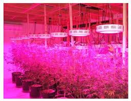 Full Spectrum Led Grow Lights Full Spectrum Led Grow Lights Reviews 2015