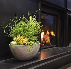 taking care of your indoor succulents u2014 harding botanicals
