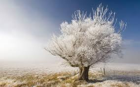 white tree 30 newest white tree wallpapers in high quality barbra mcguigan