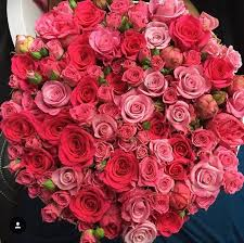 big bouquet of roses 187 best roses big bouquet luxury images on roses