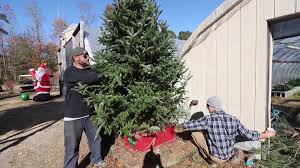 christmas tree shopping they u0027re going quick video