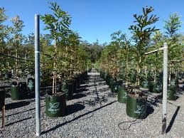 native plant nursery brisbane welcome to nursery u0026 garden industry queensland ngiq
