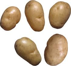 potato png image free picture