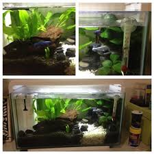 How to set up a beautiful betta fish tank Betta Fish Care