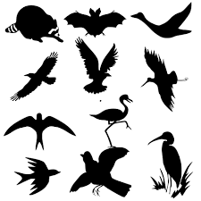 birds silhouettes free stock photo public domain pictures