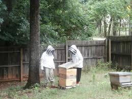 beekeeping gloves buzz beekeeping supplies