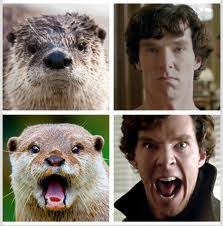 Cumberbatch Meme - benedict cumberbatch everything i know about the uk i learned