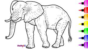 how to draw elephant for kids and shark coloring pages for