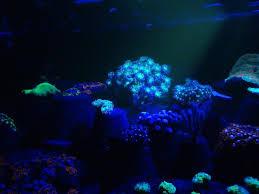 led lighting for zoanthids index of led wp content uploads 2015 04
