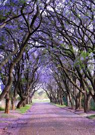 the most beautiful trees in the world 1001 gardens