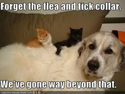 Dog Doctor Meme - consulting the doctor flea season bloomingpaws
