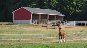 Budweiser Clydesdale Barn Budweiser Clydesdale Tradition What Makes Warm Springs Ranch