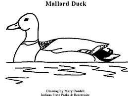 duck coloring pages duck hunting coloring pages u2013 kids coloring pages