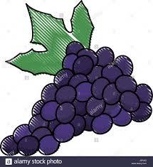 vine engraved stock photos u0026 vine engraved stock images alamy