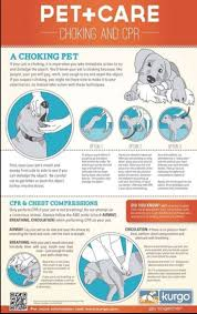 dogs 101 affenpinscher animal planet 17 best images about dog infographic on pinterest for dogs pets