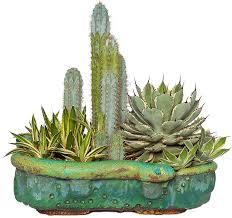 custom specialty pottery and vases for cactus and succulents
