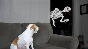 halloween prank skeleton scares dog youtube