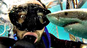 meet the shark attack survivor who invented cage diving scuba