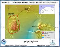 flower garden banks national marine sanctuary 2012 management plan