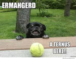 Ermahgerd Animal Memes - ermangerd omg or oh my god in standard english at any rate he is