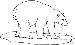 polar bear 23 coloring page free printable coloring pages